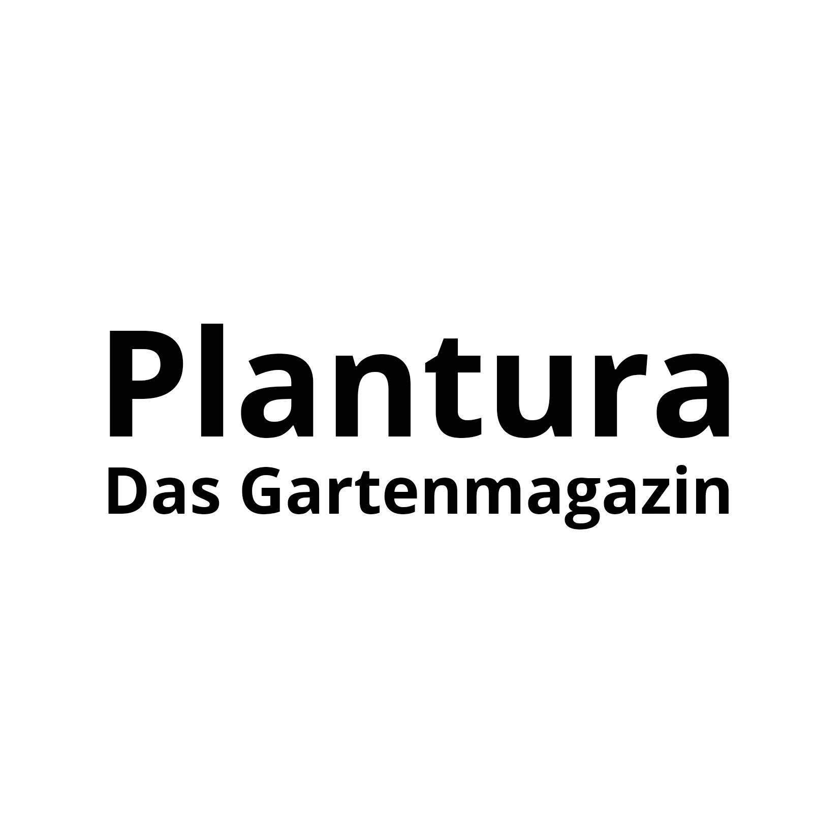Gemüsereste wiederverwenden & bewurzeln   Plantura