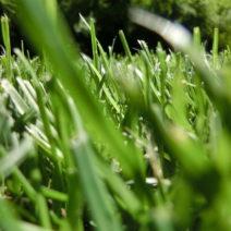 Satt Grüner Dichter Rasen
