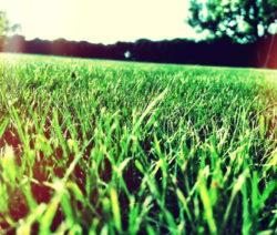 Rasen Wiese Im Garten