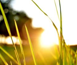 Rasen Im Sonnenuntergang