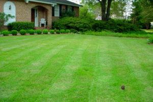 Rollrasen Rasen Garten