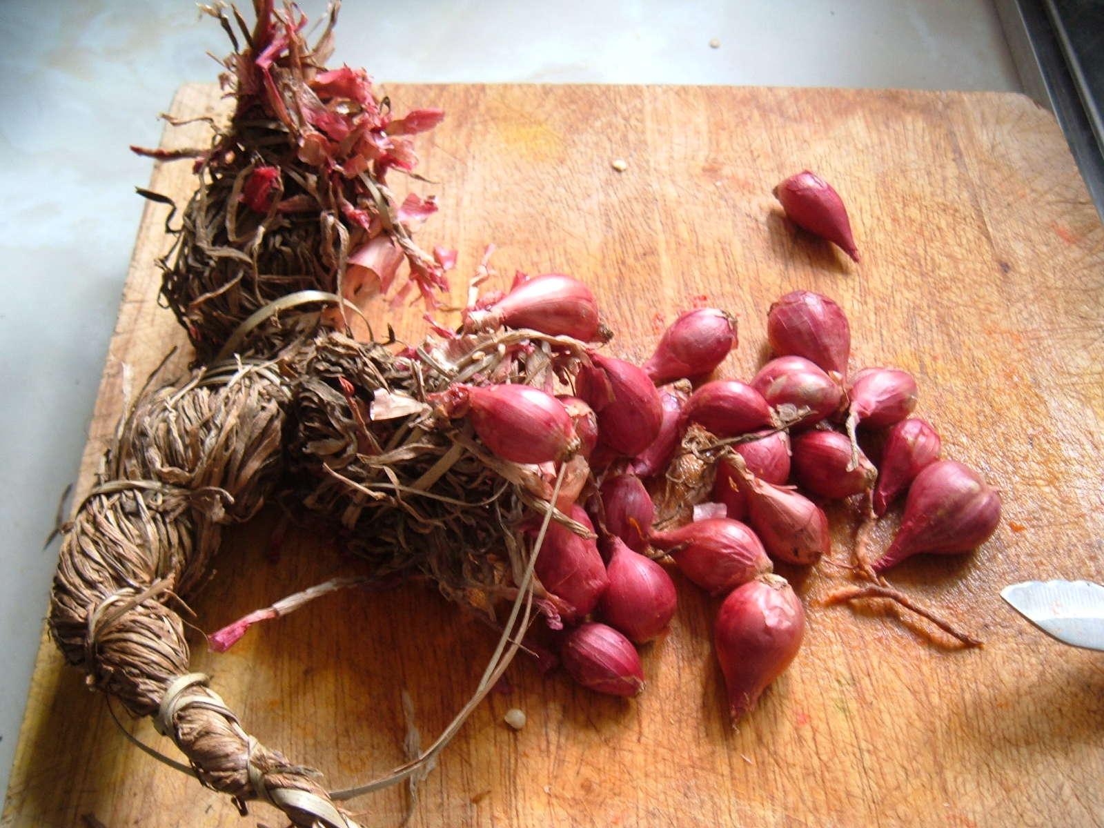 Schalotte: Die kleine Schwester der Küchenzwiebel - Plantura