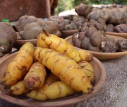 Sortenvielfalt Der Kartoffel In Den Anden Kartoffelsorten