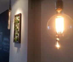 Wandbilder Mit Tillandsien Und Glühbirnen