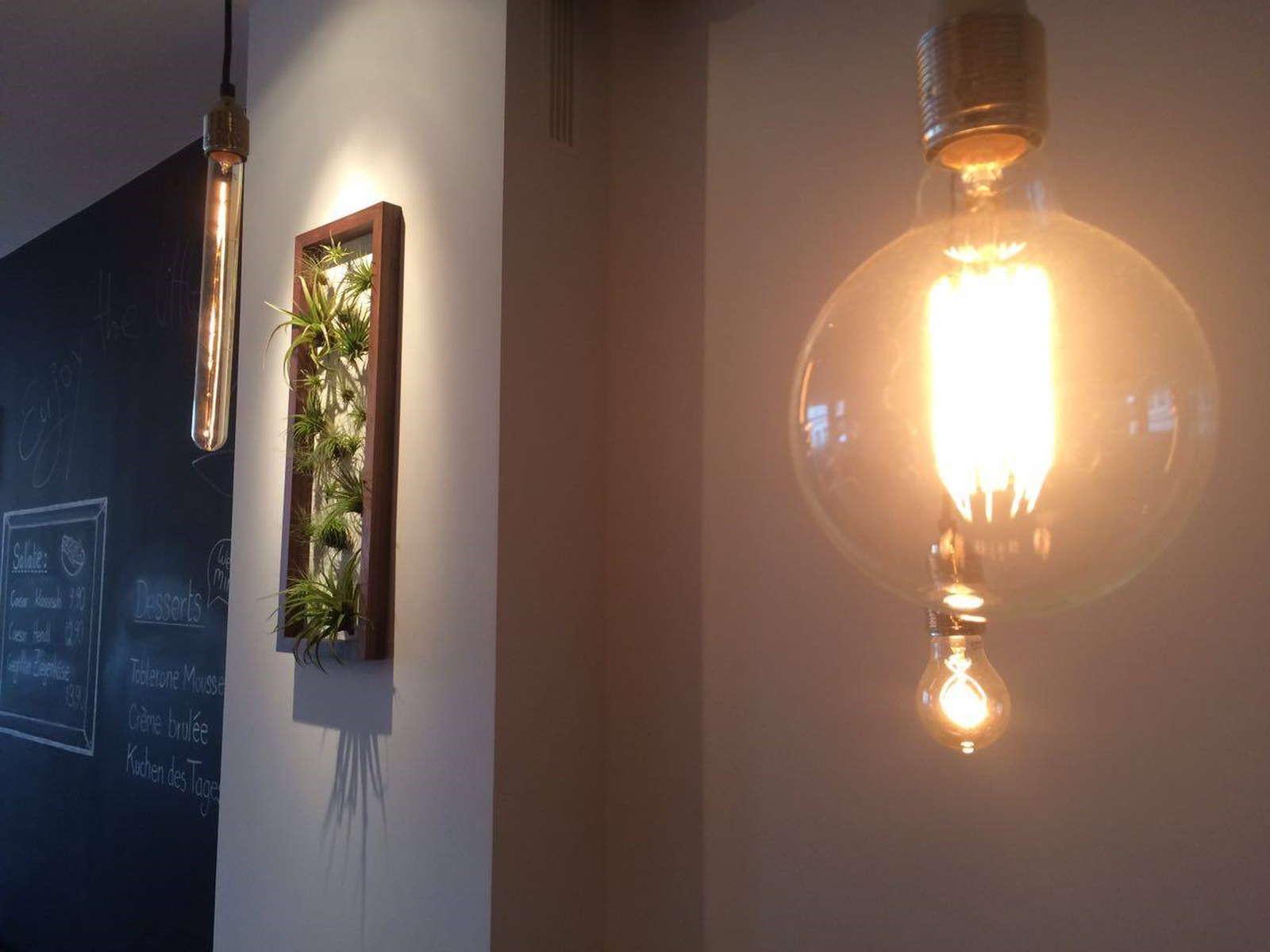 Lebende Wandbilder mit Tillandsien selbst basteln - Plantura