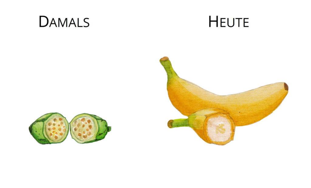 Wildformen Züchtung Urbanane Wilde Banane