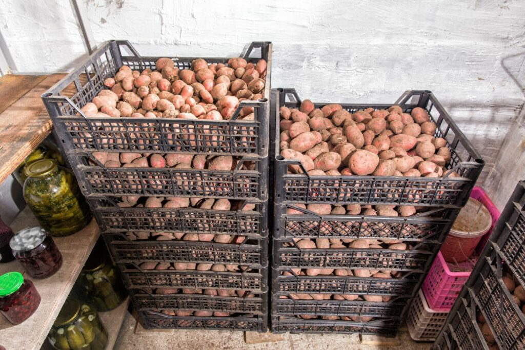 kühle Lagerung von Kartoffeln