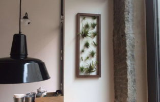 Wandbild Wandbegrünung Mit Lebenden Pflanzen Tillandsien