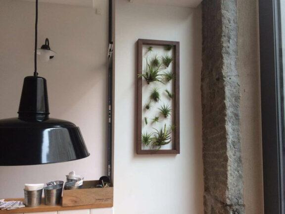 Lebende Wandbilder mit Tillandsien selbst basteln
