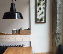 Stylisches Wandbild Mit Luftpflanzen Tillandsien Deko