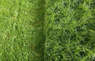 Rasen Gemäht Und Nicht Gemäht