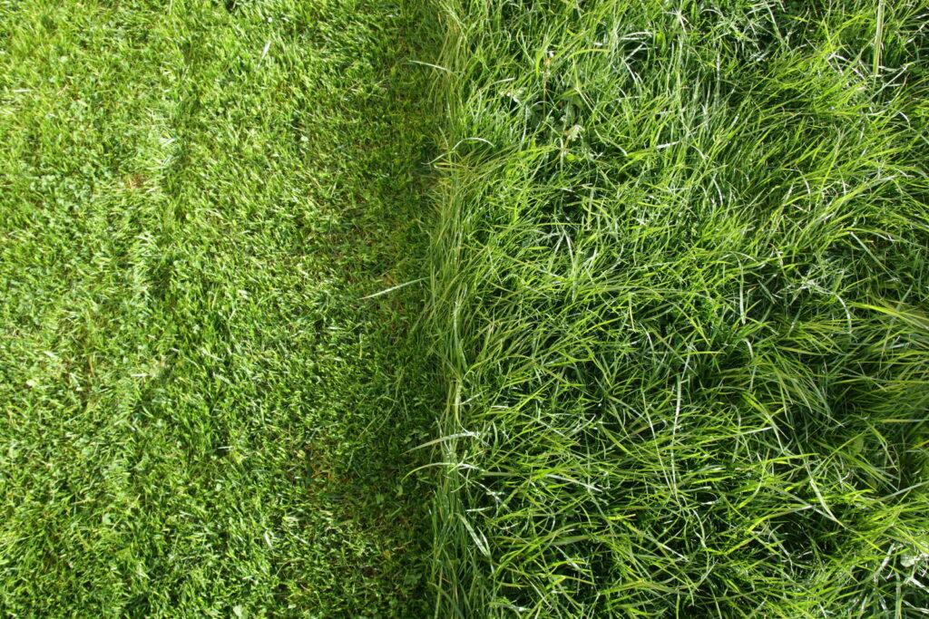 Rasen halb gemäht