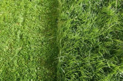 Rasen im Garten: 5 Tipps für den perfekten Rasen