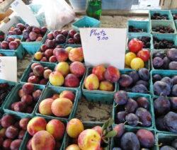 Verschiedene Pluots Auf Einem Bauernmarkt