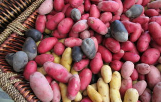 Kartoffelsorten: Die Besten 50 Sorten Im Überblick