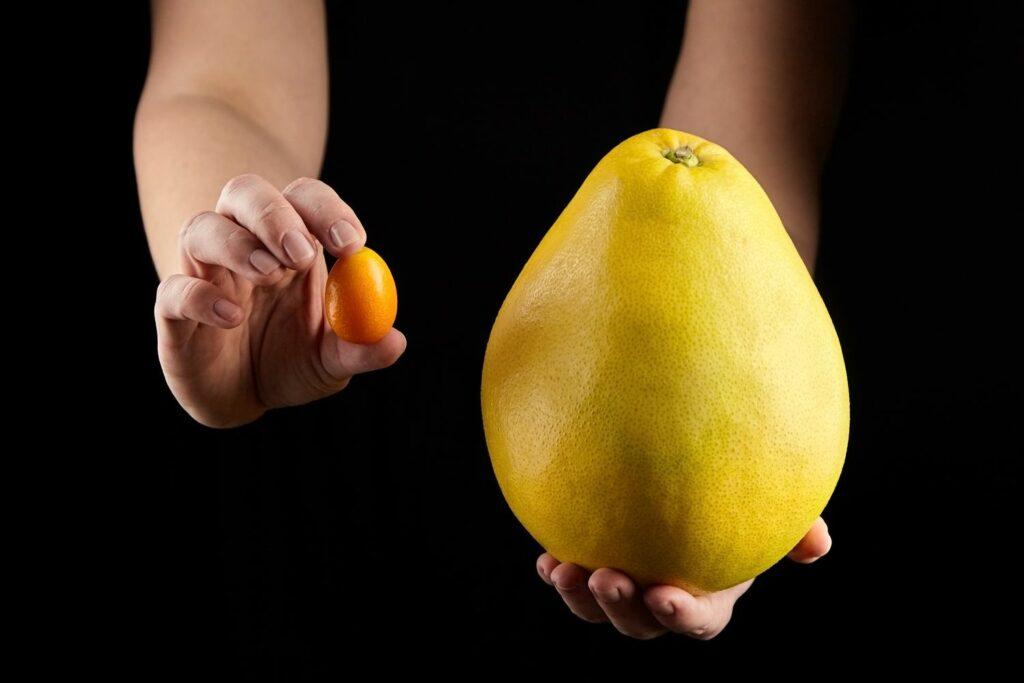 Pomelo und Kumquat im Vergleich