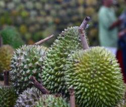 Durian Früchte Markt
