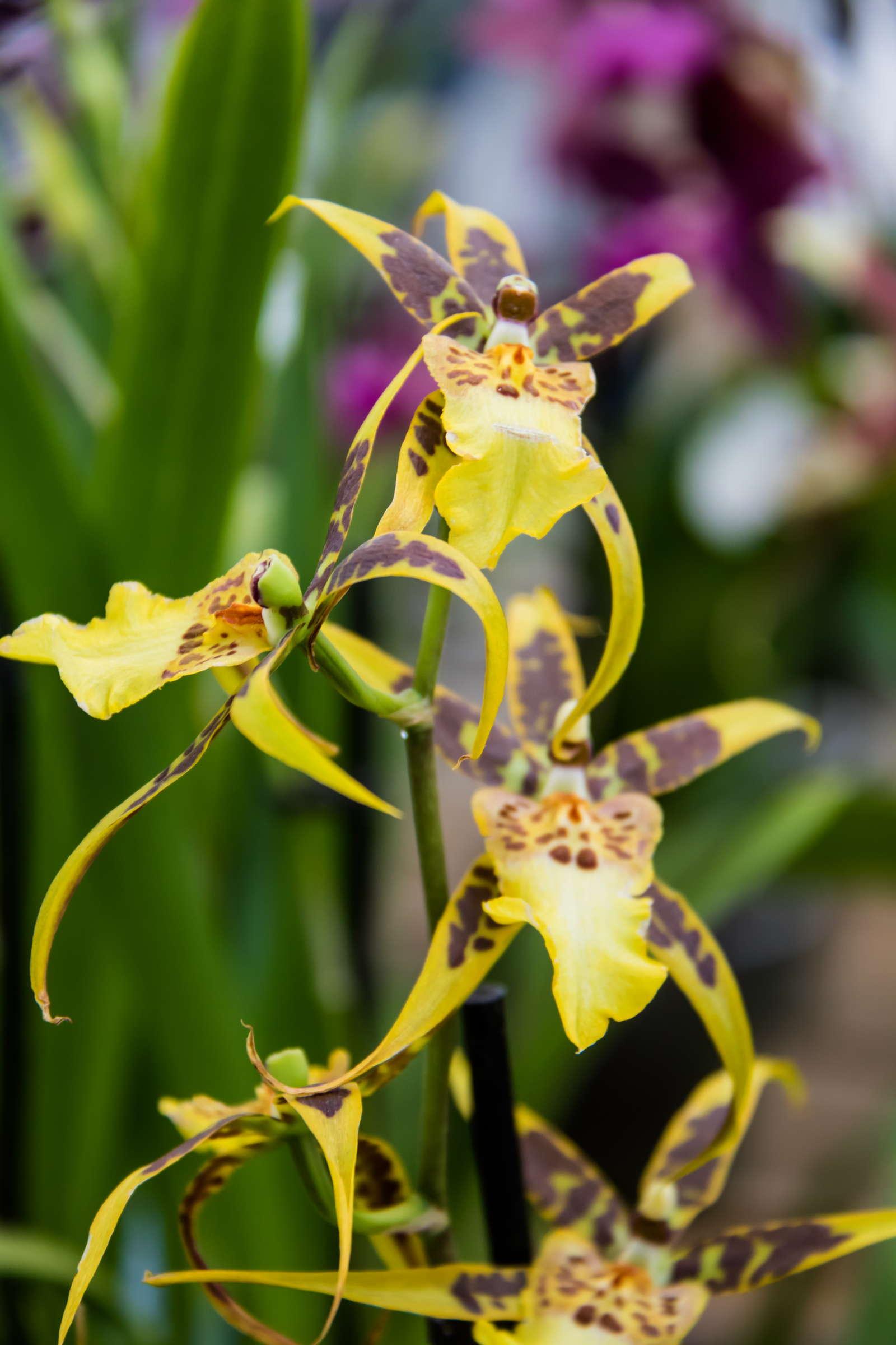orchideen sorten bilder orchideen vielfalt gartencenter beier gr n erleben orchideen arten. Black Bedroom Furniture Sets. Home Design Ideas