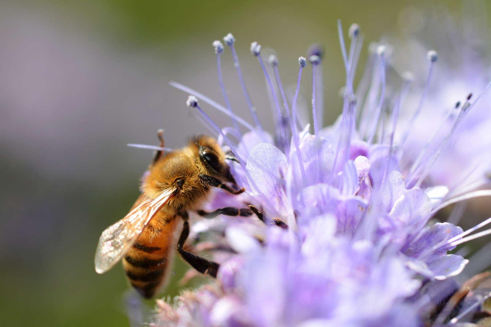 Top 10 Der Bienenfreundlichen Pflanzen Ubersicht