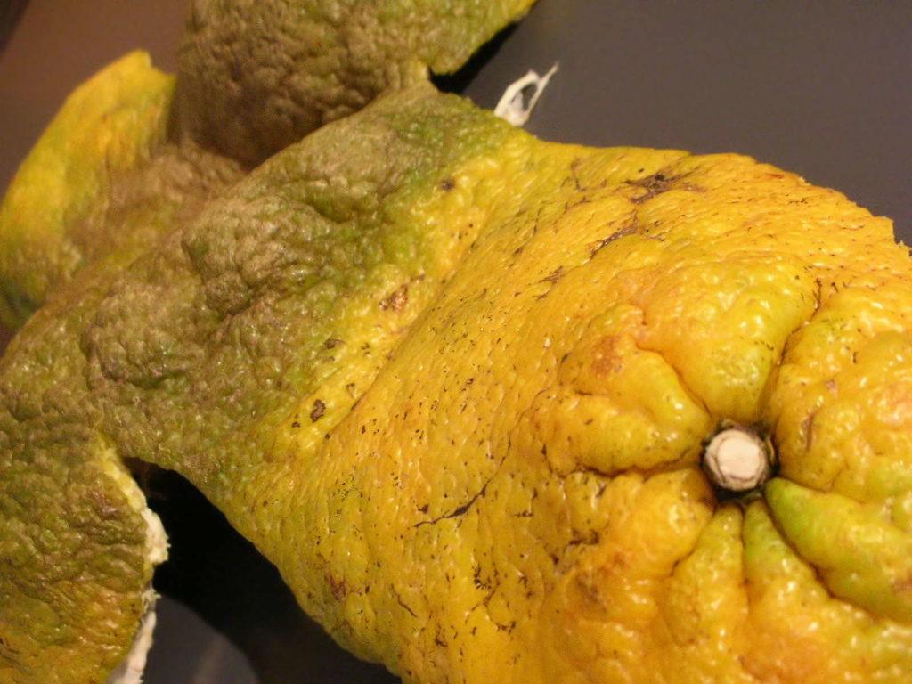 Schale der Ugli Zitrone