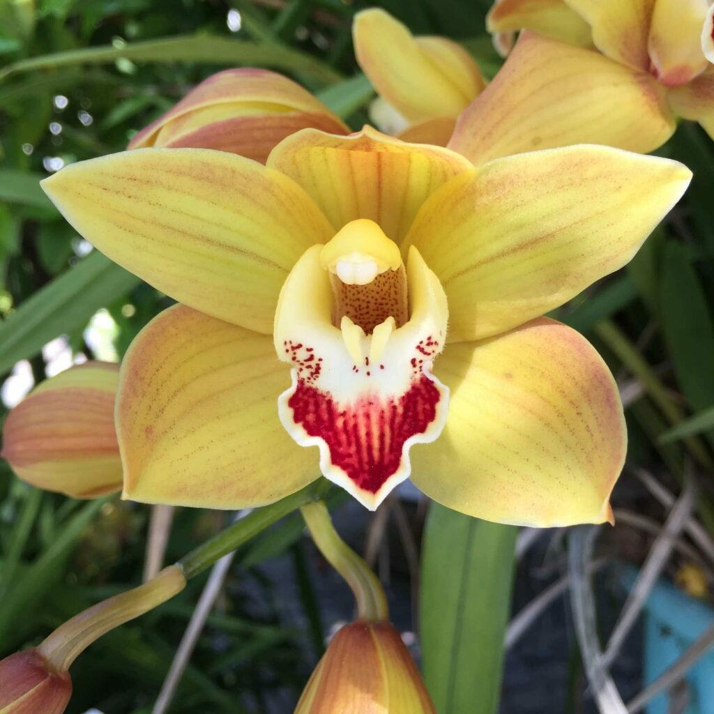 orchideen richtig d ngen anleitung tipps vom experten plantura. Black Bedroom Furniture Sets. Home Design Ideas