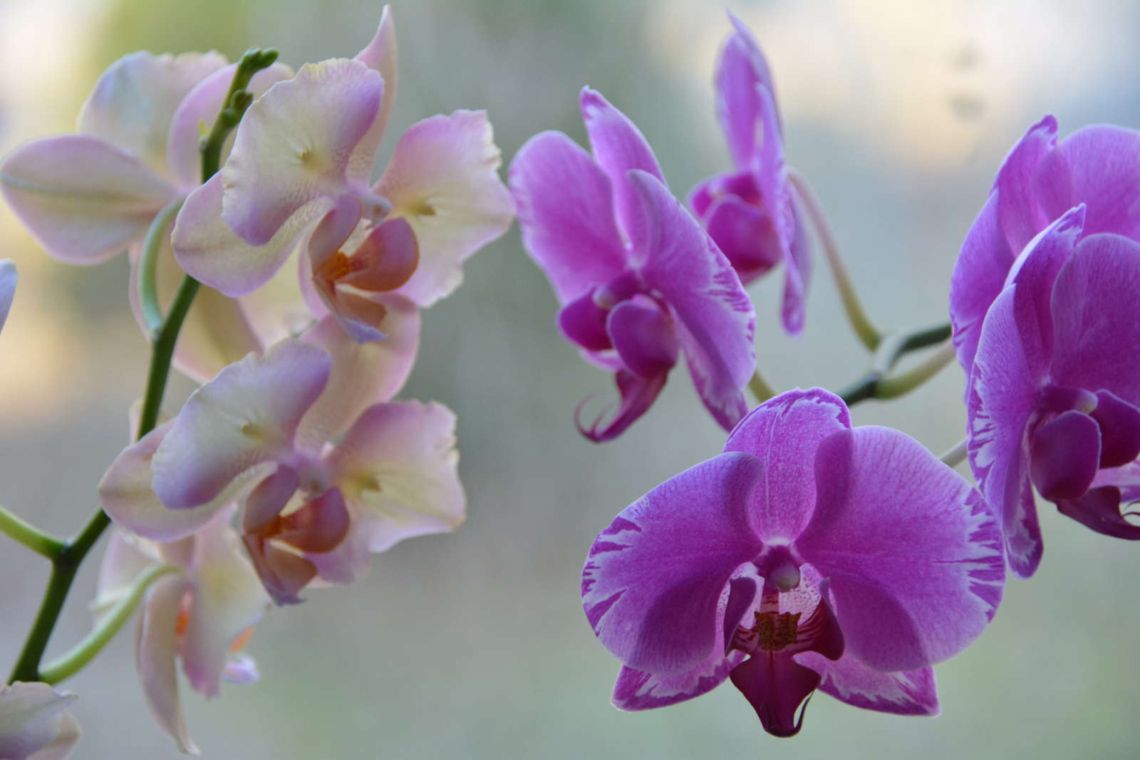 orchideen richtig d ngen anleitung tipps vom experten. Black Bedroom Furniture Sets. Home Design Ideas