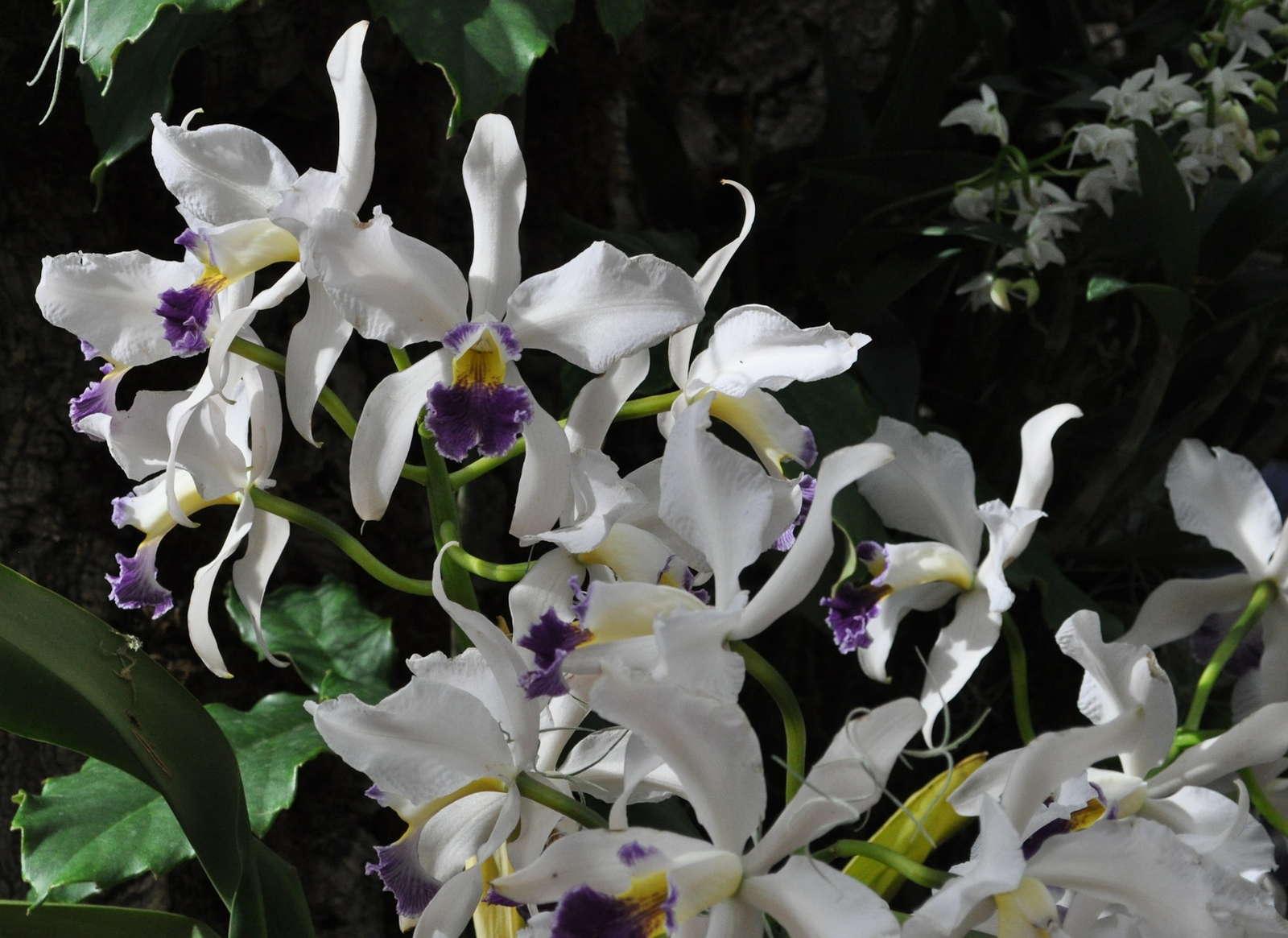 woher kommt der name orchidee plantura. Black Bedroom Furniture Sets. Home Design Ideas