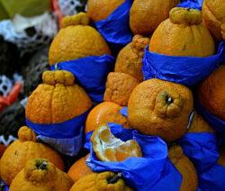 Dekopon Die Teuerste Zitrusfrucht