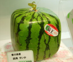 Japan teuerste Wassermelone quadratisch rechteckig