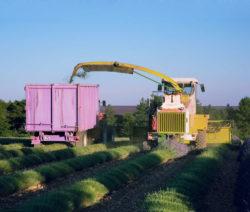 Lavendelernte Konventionell Mit Maschinen
