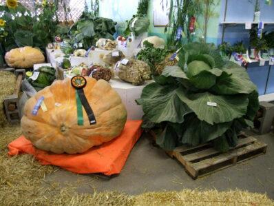Das größte Gemüse der Welt