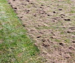 Wiese Halb Vertikutiert Rasen Vertikutieren Moos