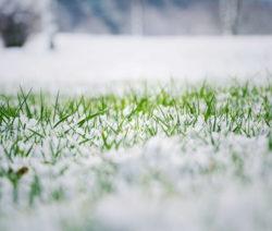 Rasen Schnee Frost Winter