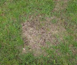 Wiese Nachsäen Rasen Rasensamen
