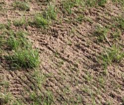 Boden Sand Rasen Vertikutieren