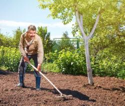 Einharken Der Samen Rasen Säen