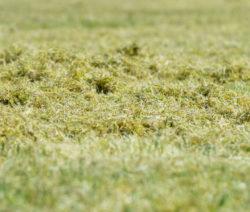 Vermooster Rasen Vertikutieren