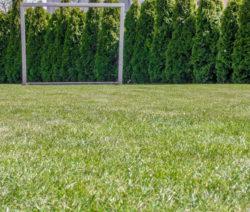 Schöner Rasen Unkrautfrei Vertikutieren
