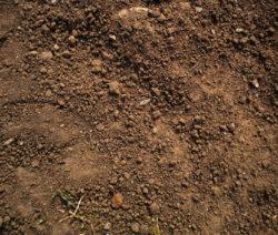 Abgetrockneter Boden Erde Aussaat