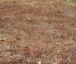 Sonnengeschädigtes Gras Verbrannte Wiese