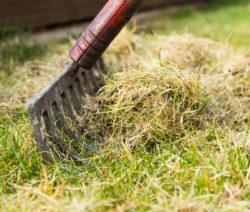 Moos Rechen Rasen Vertikutieren