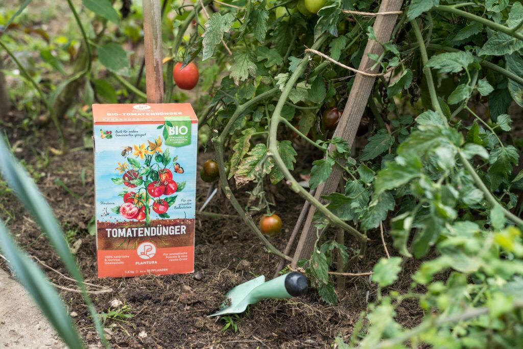 Anwendung des Plantura Bio-Tomatendüngers