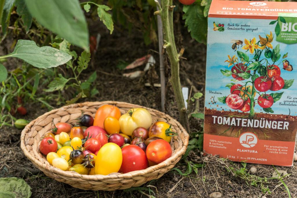 Geerntete Tomaten mit Plantura Bio-Tomatendünger