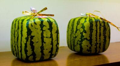 Quadratische Wassermelone: teure Kuriosität aus Japan