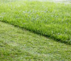 Teilweise Gemähter Rasen