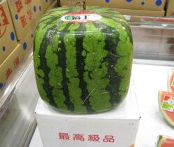 teuerste Wassermelone quadratisch rechteckig