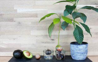 spargel das edelgem se im eigenen garten anbauen plantura. Black Bedroom Furniture Sets. Home Design Ideas