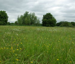 Weide Mit Schnell Wachsenden Gräsern Und Wildblumen