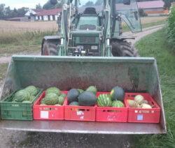 Melonenernte Mit Dem Traktor Einfahren