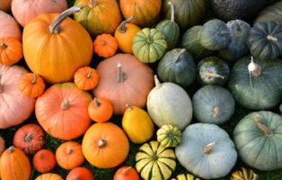 Kürbissorten: Essbare, Giftige & Altbewährte Sorten (Übersicht)